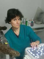 clinica veterinaria grugliasco pronto soccorso parma - photo#41